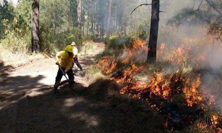 Acciones para evitar incendios forestales