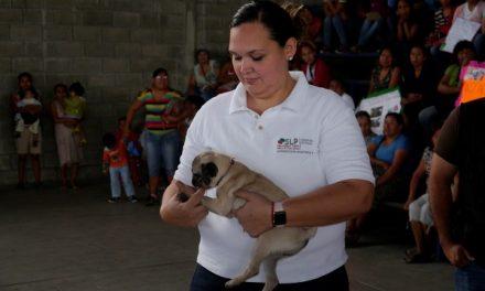 Semana de Vacunación Antirrábica Felina y Canina