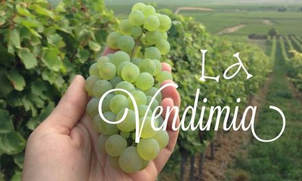 SLP producción de vino en la región del Bajío