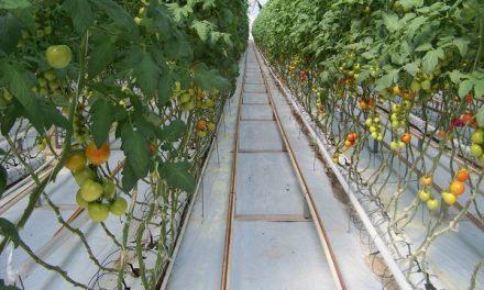 Invernaderos de Santa Rita sin crisis financiera
